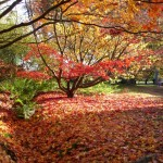 Harcourt Arboretum