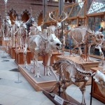 University Museum of Natural History